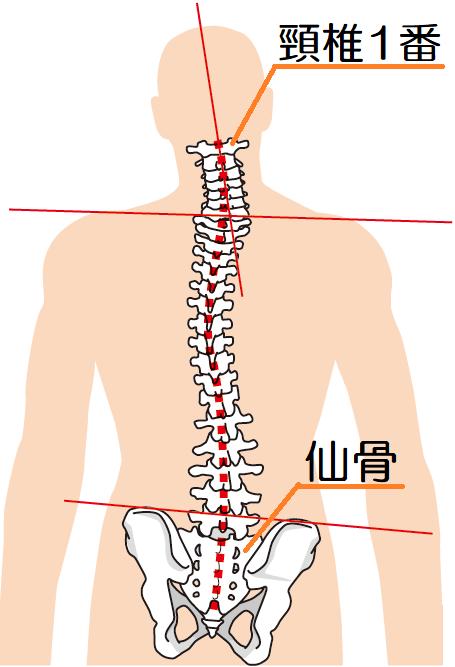 背骨と骨盤の歪み